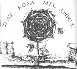 https://mysterybabalon.files.wordpress.com/2011/05/dat_rosa_mel2.jpg